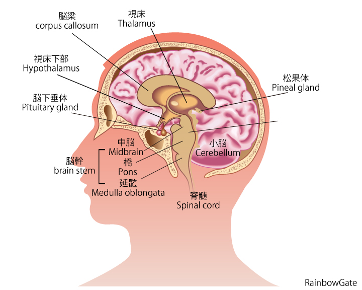 brain720